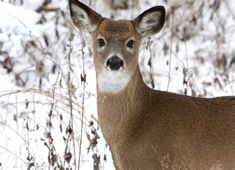 Cold weather months prove challenging for wildlife in the