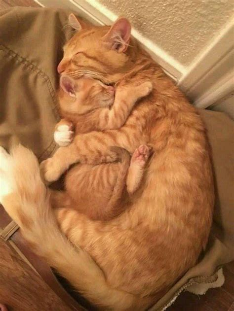 24 Images Of Cats Hugging Other Cats That Will Hug Your